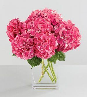 Hydrangeas are amazing in any color!