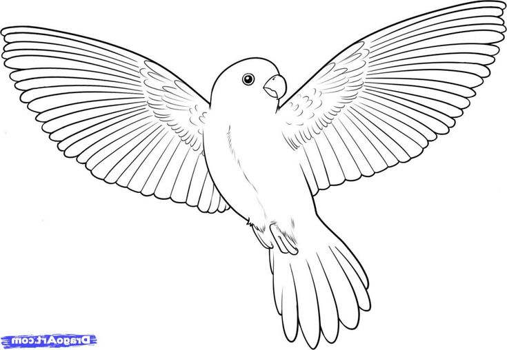 how to draw flying owl