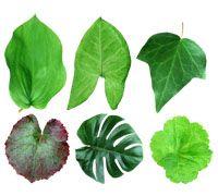 Lenagold - Клипарт - Зеленые листья 8