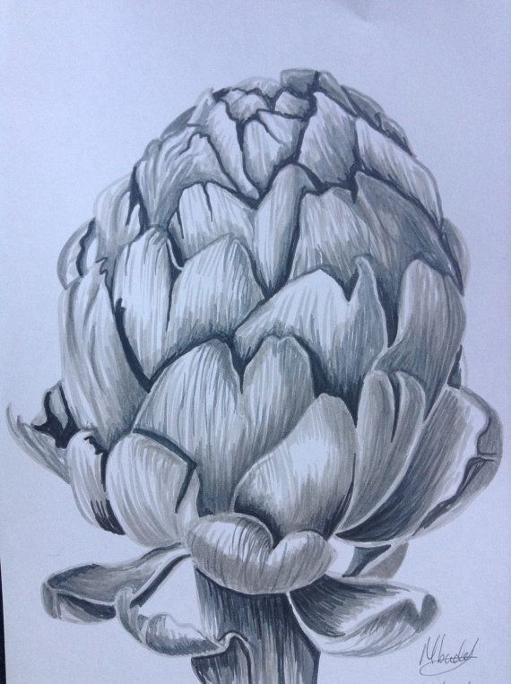 Original drawing of an artichoke on A4 lilac card. Grey artist pens were used.  Signed and dated by the artist - Maude Baddeley.  Mount and frame