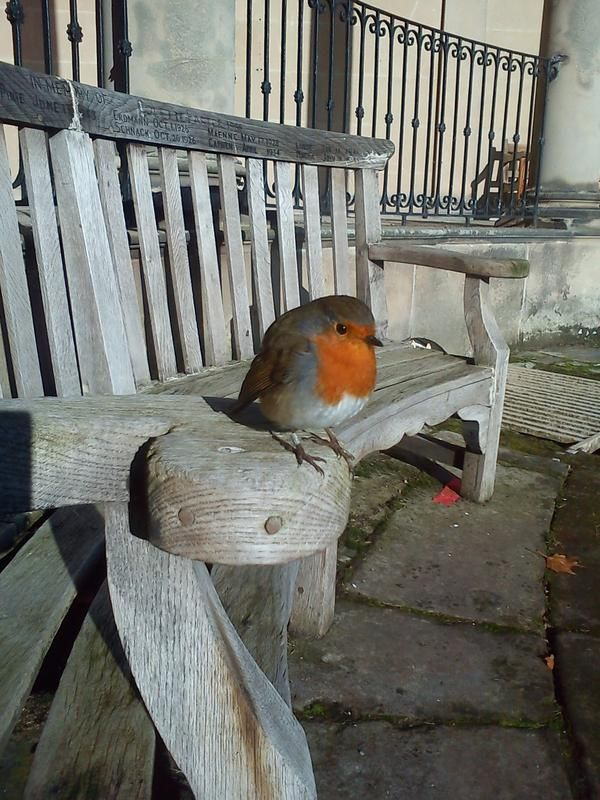 Wee Robin having a rest