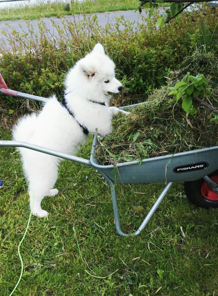 My dog likes ti help us with the garden!