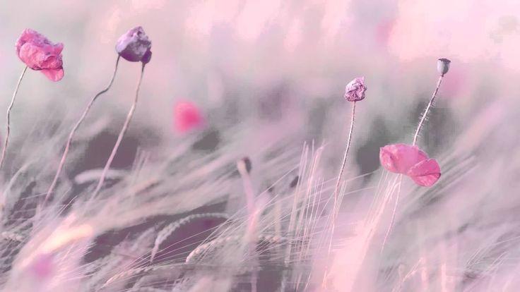 3 Saat En İyi Dinlendirici Müzik- Relax - Romantik Piyano - Fon Müziği -...