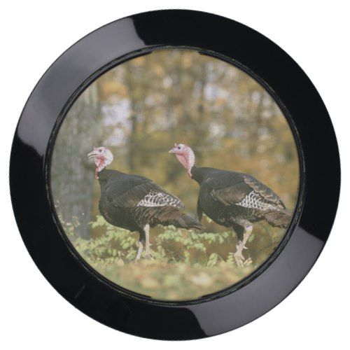 A male Female Turkey Pair Photograph in Fall USB Charging Station