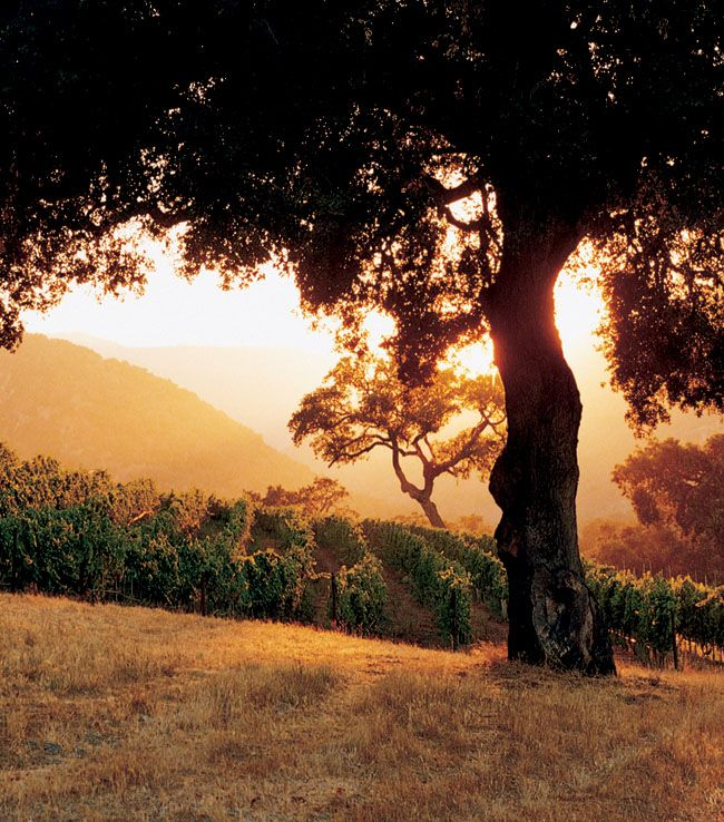 oh wow... I want to be here, I wan this in a painting, I want to live here. Just so beautiful and peaceful.. Vineyard Beauty