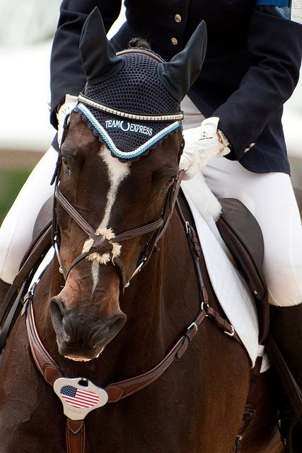 Heather Morris' Slate River. Love the look in his eye. So game! 2011 Rolex Kentucky Three Day Event. #rk3de // Photo by Mandy Collins