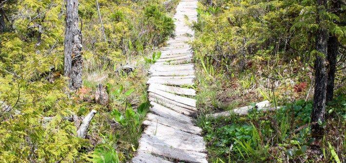 6 Days on the West Coast Trail   Follow The Wild