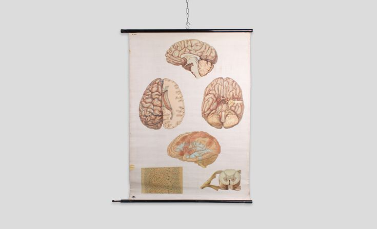 "Available at: ww.onlyonceshop.com Beautiful vintage German DDR school education poster from 1950 - 1970s. The board shows the human brain in 4 detailed views including nerves and nerve cells. The poster is rolled on a wooden oval hanging piece with a metal hook on the bottom side. Comes in good condition - the paper has a slightly yellowish patina with few damages on the paper sides. The wooden stick it is hang on has a slightly rusty hook to hang. Published by ""deutsches Hygiene Museum…"