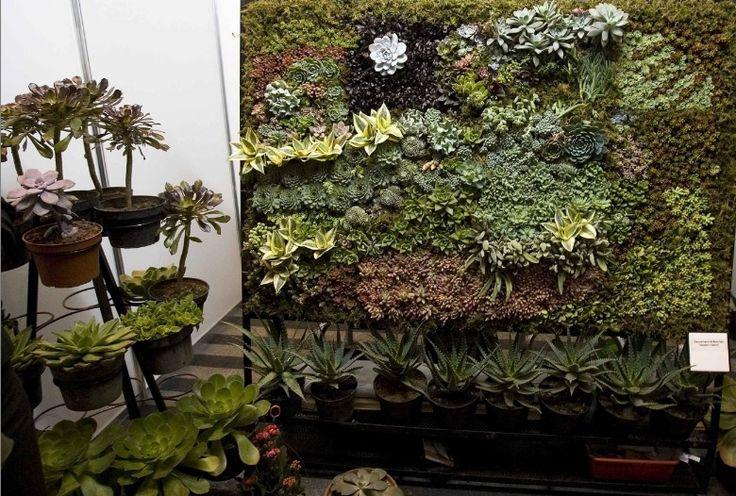 Jardines con poca agua para tener bellas plantas no for Arboles de poca raiz para jardin