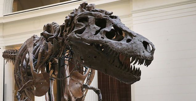 Paleontologists Discovered Sue the T. Rex 25 Years Ago Today