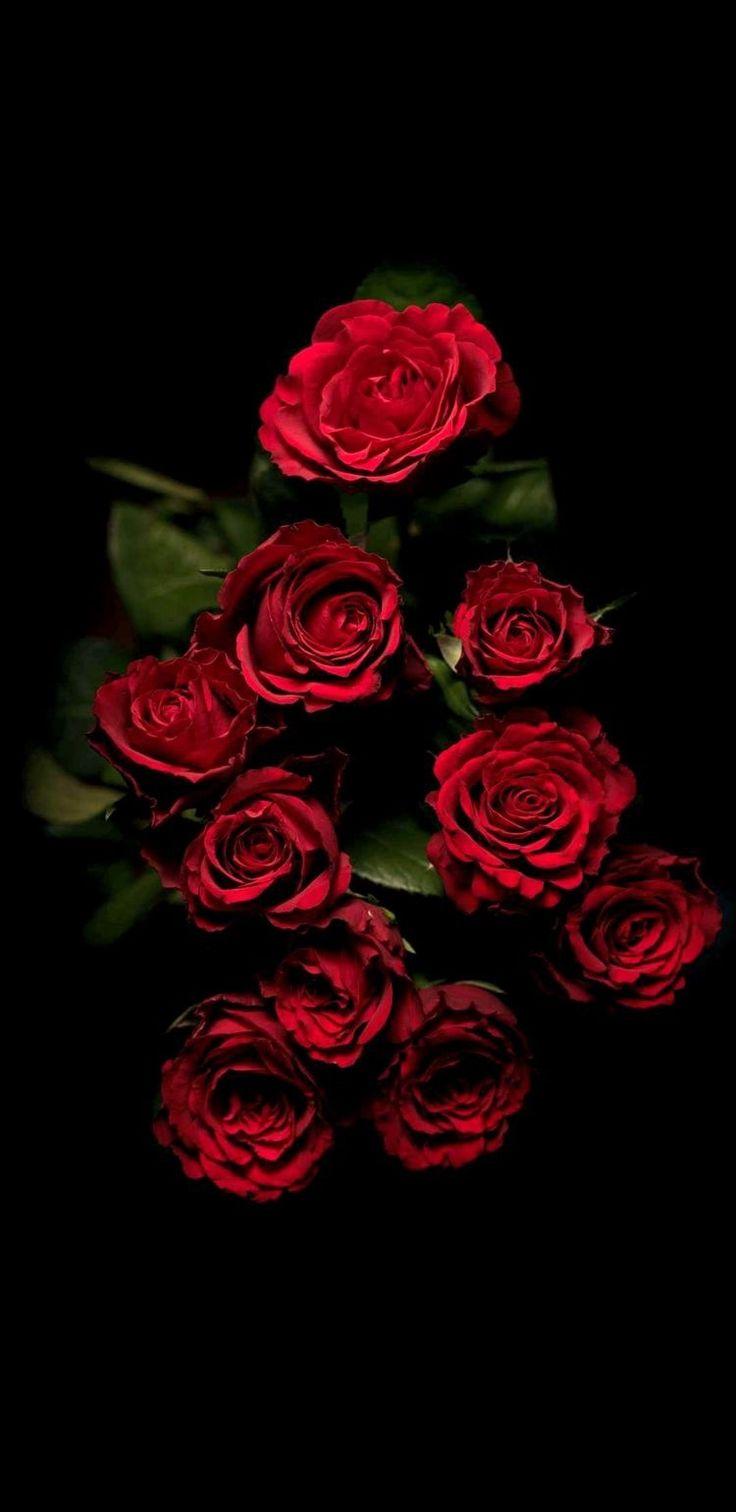 Обои на айфон цветы на черном фоне розы