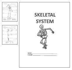 Skeletal System Unit Work Health Skeletal System Etc Pinterest