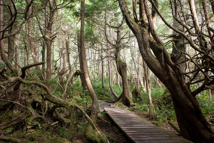 Trees twisted by coastal winds lead you to Botanical Beach. Looking for a weekend getaway on southern Vancouver Island? Read about Victoria blogger's journey to Port Renfrew along the Pacific Marine Circle Route.