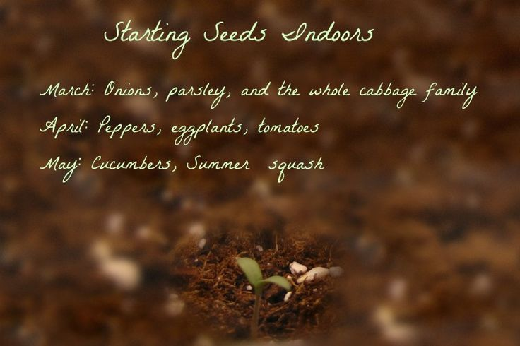 Northern homesteading- starting seeds indoors