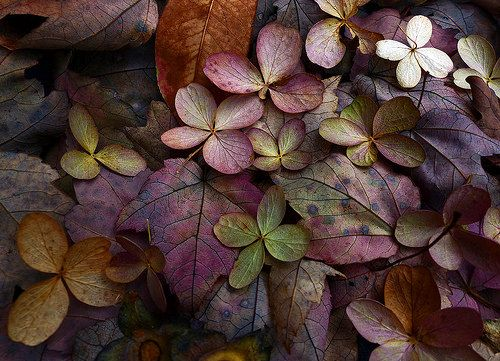Early autumn | Flickr - Photo Sharing!