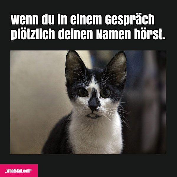 Whatsapp Lustige Sprüche Bilder