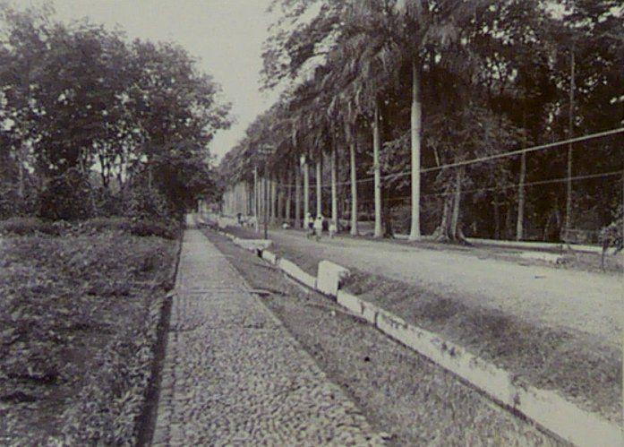 Buitenzorg 1911 : Proeftuin.