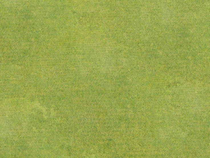 golf course field grass