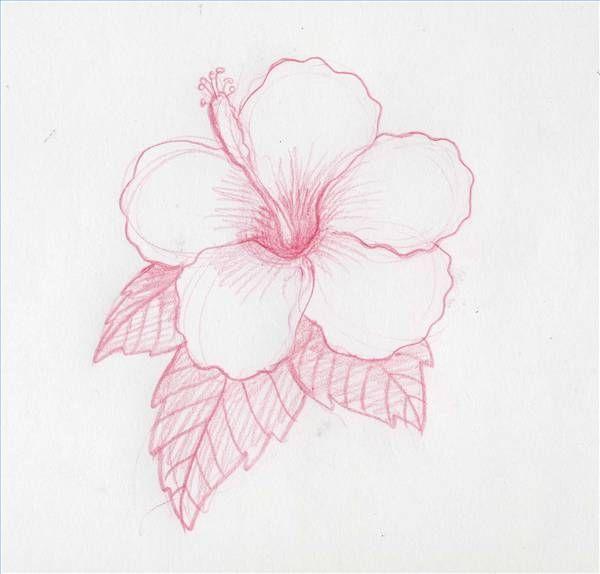 How to Draw Hawaiian Flowers   How to Draw Hawaiian Flowers Step by Step   eHow