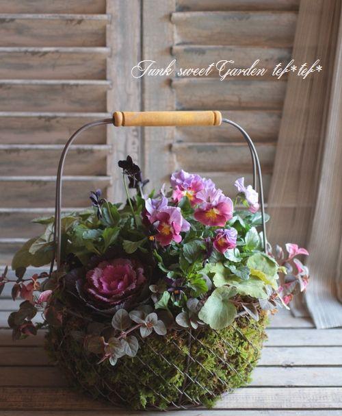 「Junk sweet Garden tef*tef*」で取り扱う商品「tef*tef*寄せ植え<BR>2014 * no.43 *<BR><BR>みもとパンジー『パッションウェーブ』」の紹介・購入ページ