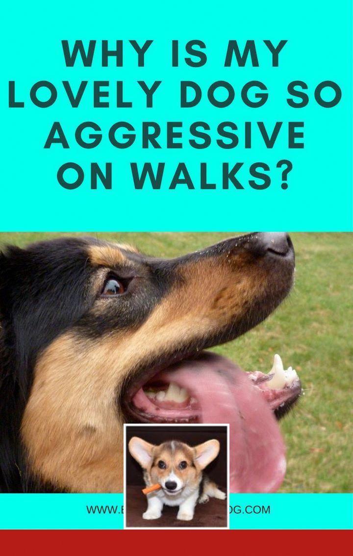 Dog Party Tricks Dog Psychology Dogs Stop Dog Barking