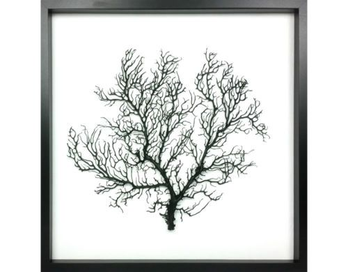 Black-Framed-Natural-Coral-Sea-Fan-50x50cm