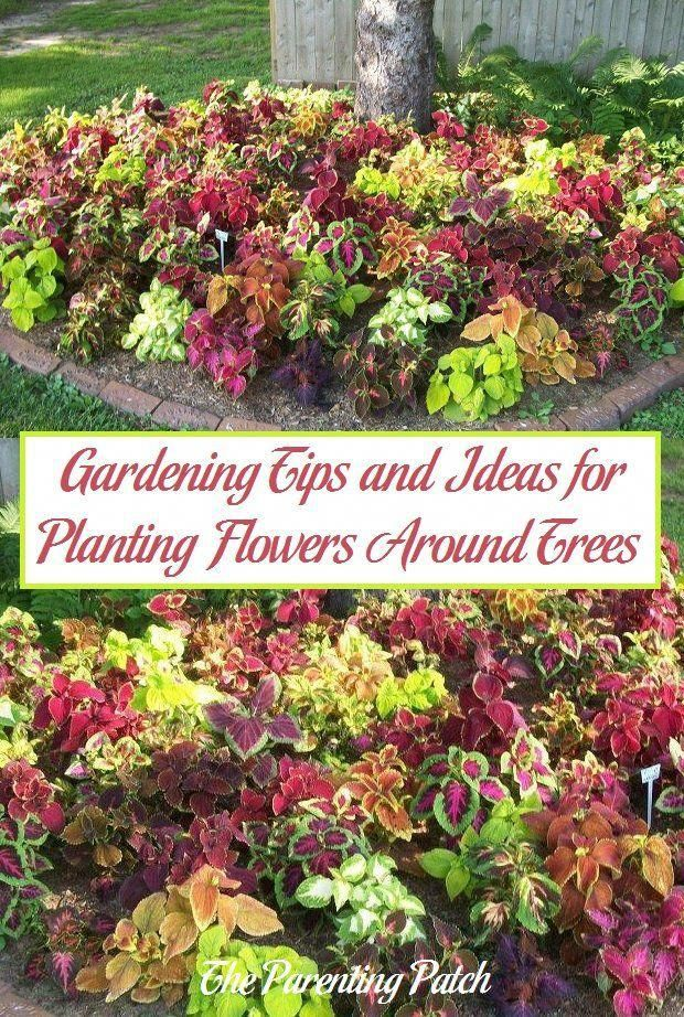 Planting Flowers Around Trees Is An Easy Way To Add Color To Your Landscaping While Covering Up The Bare And Sometimes Muddy Patches Created By The Shade Of
