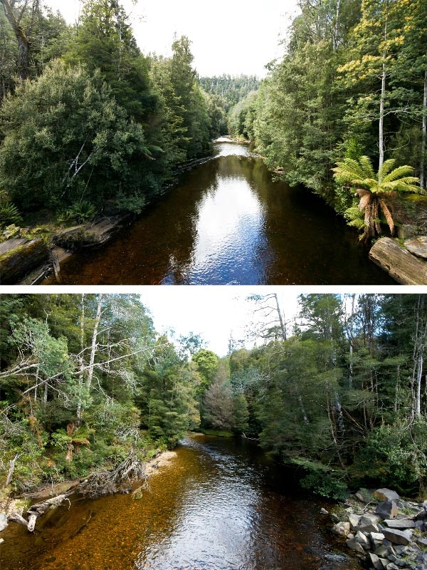 Styx River. Photo by Carol Haberle, article for Think Tasmania.