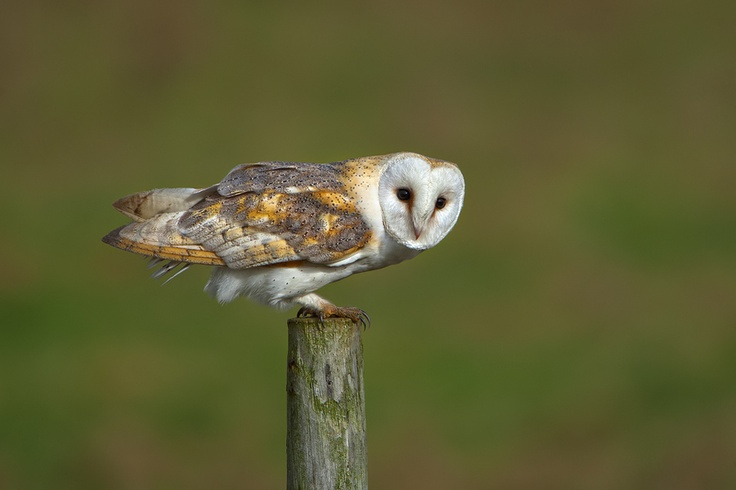 Barn Owl: Photos Community, Owl Canon, Barns Owl, First Pictures, Owl Barns, Photos Shared, Barn Owls