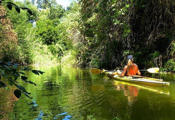 Lake Solano A Kayaker's Heaven http://www.paddlingcalifornia.com/article_lake_solano.html