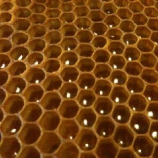 Honeyboards