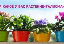 Выращиваем Удачу! Как определить свое счастливое растение?