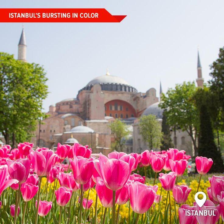 Зараз повним ходом проходить Фестиваль тюльпанів у Стамбулі. Кращі турецькі ландшафтні дизайнери намагаються здивувати жителів та гостей міста своїми яскравими композиціями із різних сортів тюльпанів.