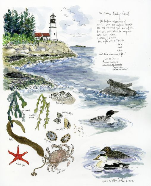Illustrations in a nature journal by Clare Walker Leslie