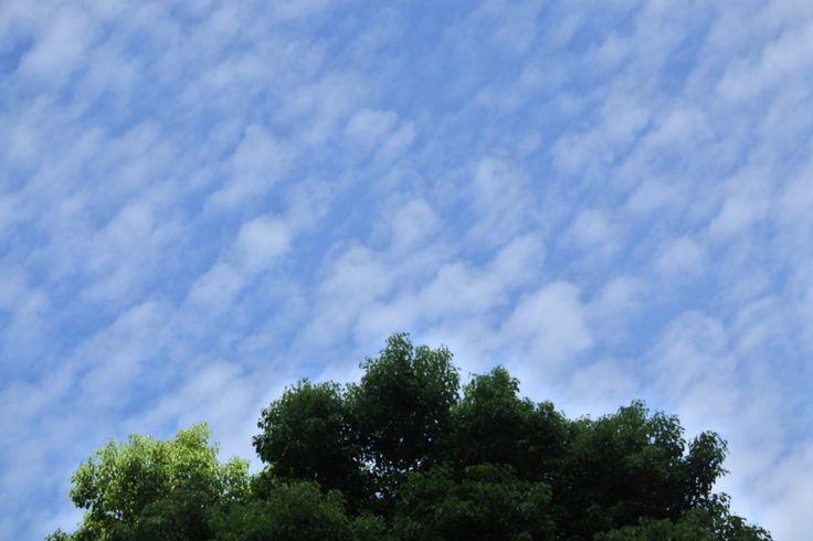 西日本、雨なく星降る!?熱帯夜|伊藤みゆきオフィシャルブログ「晴れやかのミカタ」Powered by Ameba