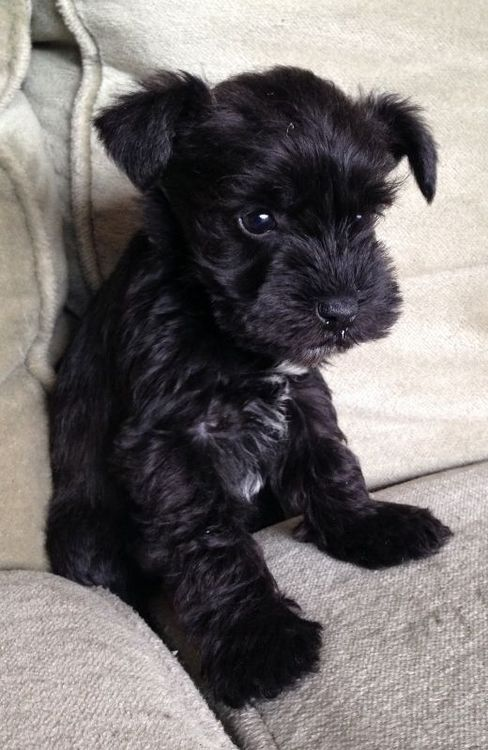 This is what our baby, Olive, must have looked like as a pup... awwwdorable!