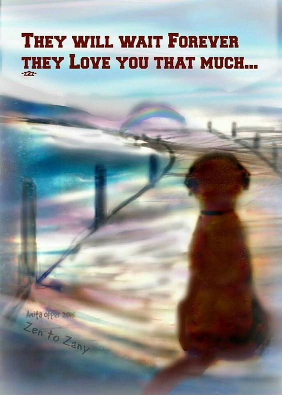 They WILL WAIT ON YOU FOREVER!  We should be more like dogs!