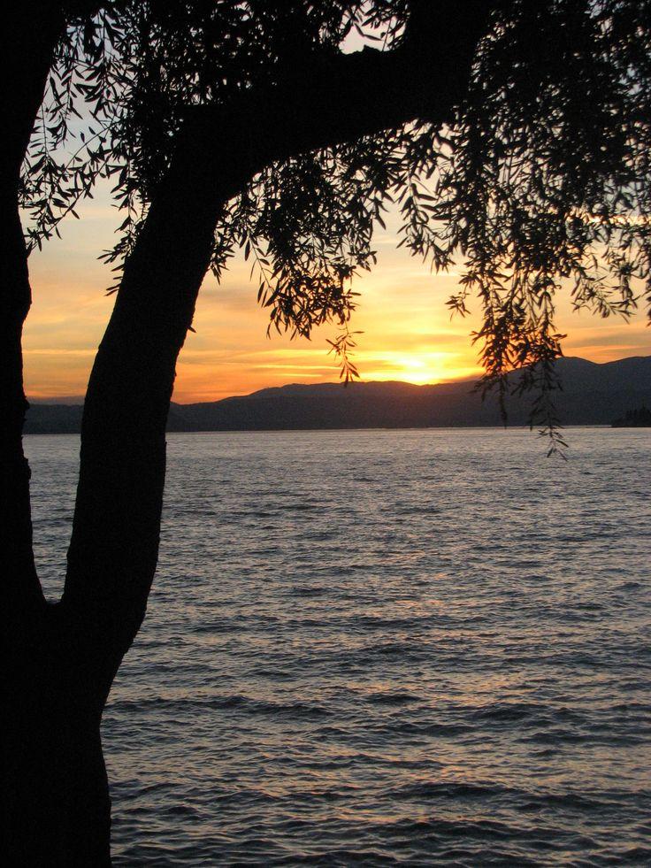 Sunset through the olive trees of Lake Garda