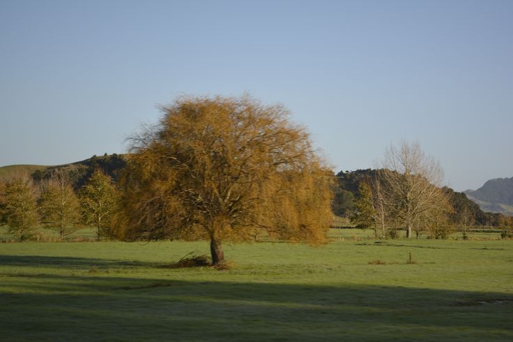 NZ Countryside