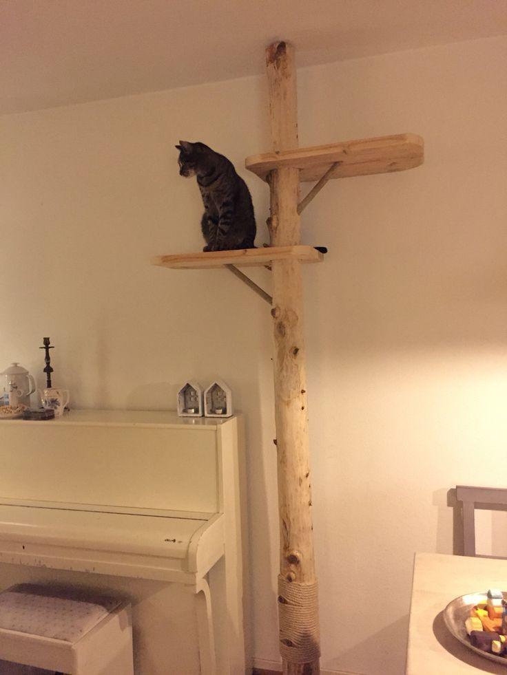 Krabpaal gemaakt van een boomstam. Cat tree.