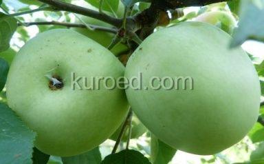 Ответ на вопрос: Чем отличается яблочное #пюре от джема или повидла?  http://www.kuroed.com/recipe/70459/ #кулинария #рецепты #вкусно #яблоки