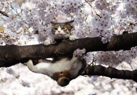 ぶらさがった猫