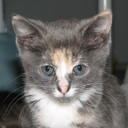 orange cat freckles