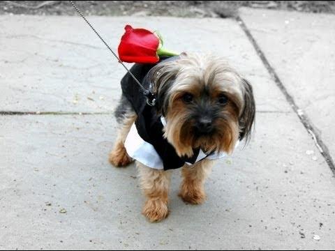 Puppies Deliver Surprise Marriage Proposal