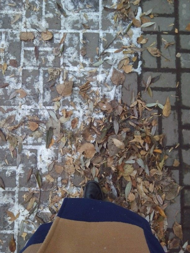 Pavement & leaves