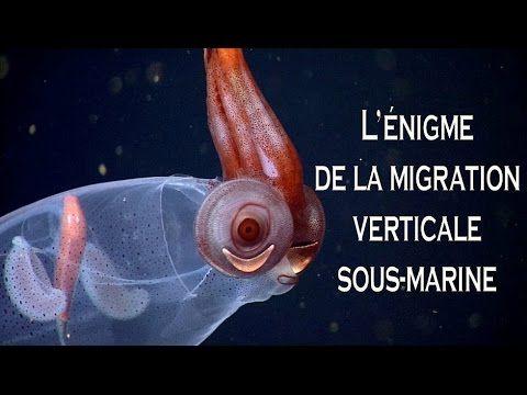 L'énigme de la migration verticale sous-marine