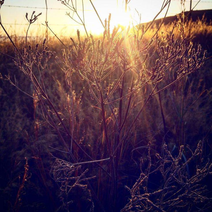 The last light #kznskies #midlandssunsets #sunset #curryspost #kznmidlands #mobilephotography #mobilephoto #photobug #photographer #photography #photo #captureit #amazingviews #beautifulplaces #pixel_panda #loves_southafrica #instagramza #instagram #igersouthafrica #instagramsa #southafricaza #exploreza #love_sa #sarahvdb #myphoto #snapshot