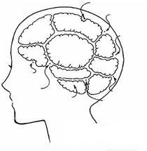 뇌구조 양식