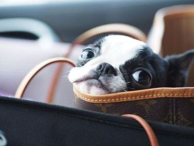 take me with you | dogs