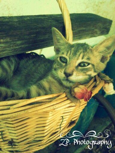 Kitten ^_^